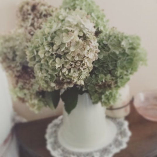 Drying Hydrangeas   Vintage Floral Cottage