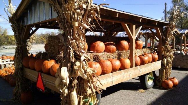 Des Moines, Iowa Pumpkin Patch | Vintage Floral Cottage