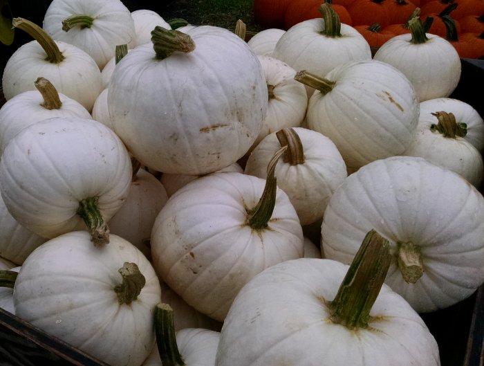 Pumpkin World Visit 2017 | Vintage Floral Cottage