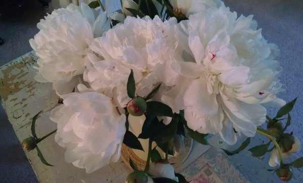 Real peonies | Vintage Floral Cottage