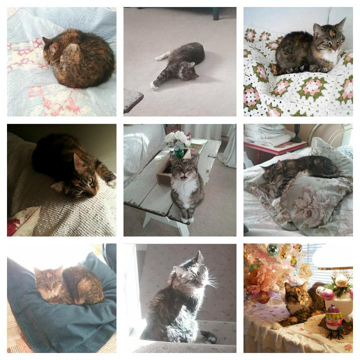 Top 9 Instagram photos - Lily the Cottage Cat | Vintage Floral Cottage