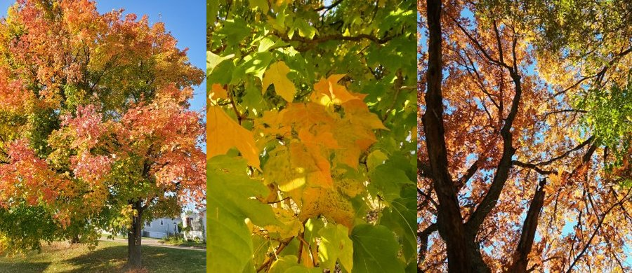 Three beautiful fall color scenes | Vintage Floral Cottage